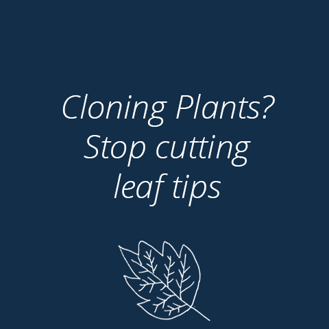 Should Leaf Tips Be Cut When Cloning?