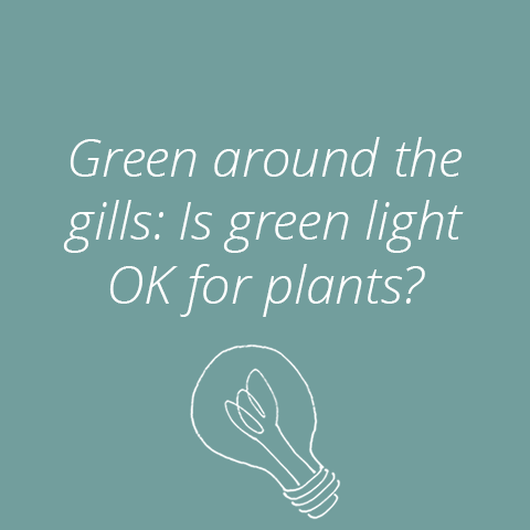 What Do Plants Use Green Light For?