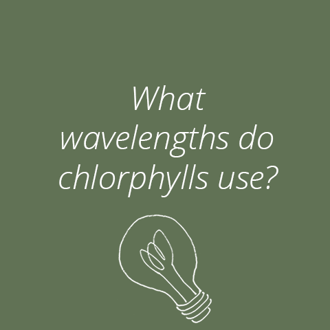 The Chlorophylls: Key Pigments for Photosynthesis and Plant Growth