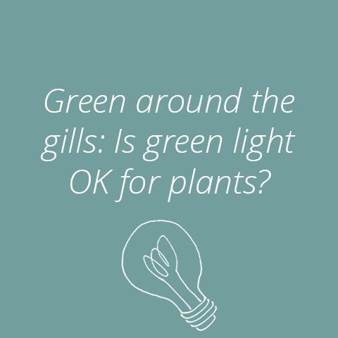 green-light-grid